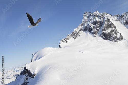 Fotobehang Eagle Eagle flying near snow covered mountains