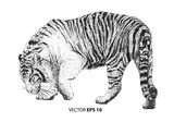Tiger walking hand draw sketch black line on white background vector illustration.