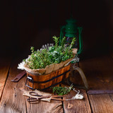 Herbal collection of: thyme,oregano, rosemary - 192424390