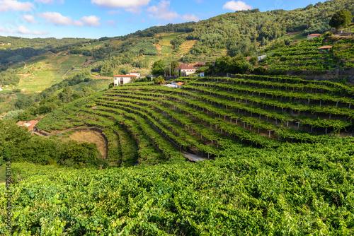 Aluminium Wijngaard Vineyards of the Ribeira Sacra, Lugo, Spain
