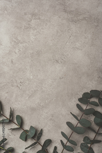 Fotobehang Stenen top view of green eucalyptus leaves on concrete surface with copy space