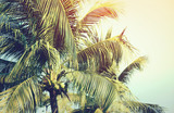 Detail of coconut trees with soft light background or vintage style. - 192443989