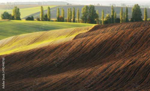 Fotobehang Diepbruine Hilly field. Autumn dawn in the field. Quiet morning in a picturesque field
