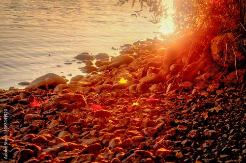 Foto Murales autumn leaves on a rocky field by water