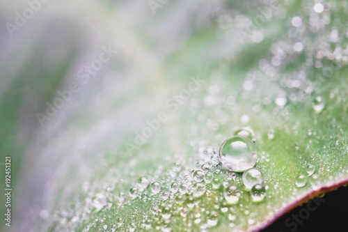 Foto op Canvas Natuur Droplets on the leaf in the morning
