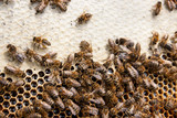 Busy bees, close up view of the working bees on honeycomb. . - 192460995