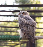 owl at the zoo - 192463144