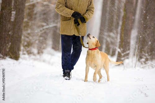 Man with dog on a leash walks in snowy forest in winter
