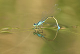 Blue Tailed Dragonfly - 192482721