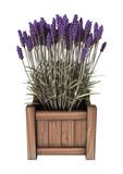 3D Rendering Lavender Flowers on White - 192489336