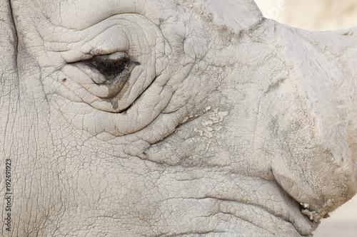 Aluminium Neushoorn Rhino Cry