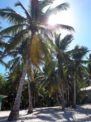 The sun makes its way through the palm trees on the beach with white sand