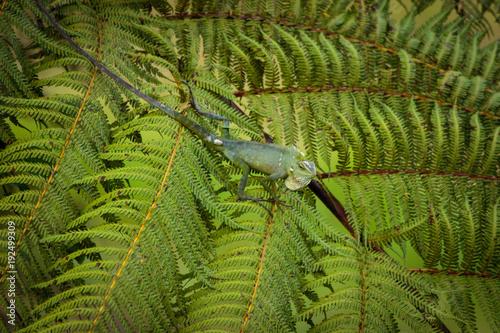 Papiers peints Bali Green Lizard