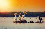 Pelican colony in Danube Delta Romania. The Danube Delta is home to the largest colony of pelicans outside Africa