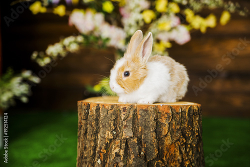 Papiers peints Herbe Domestic rabbit sitting on the stump