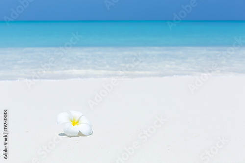 Aluminium Plumeria White plumeria flowers on tropical beach