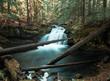 A rushing rain forest waterfall in western Oregon  - 192534584
