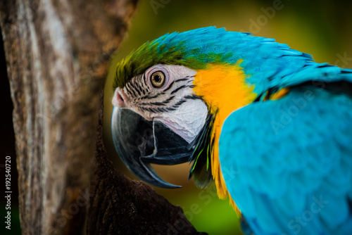 Aluminium Papegaai Parrot, lovely bird, animal and pet in the garden