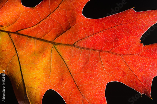 Close Look at the Beauty of a Colorful Autumn Leaf - 192543112