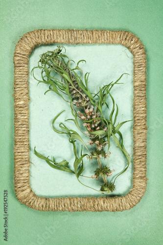 Foto Murales Herbarium. Motherwort. Dry plants. Scrapbooking.