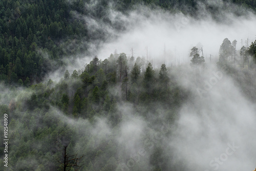 Aluminium Grijze traf. Foggy morning in the forest