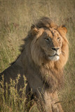 King of the Jungle - 192560778