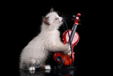 Funny fluffy kitten with a violin - 192567507