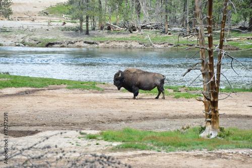 Aluminium Neushoorn Trip to Yellowstone National Park, USA