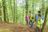 Wegsuche beim Wandern im Wald - 192578189