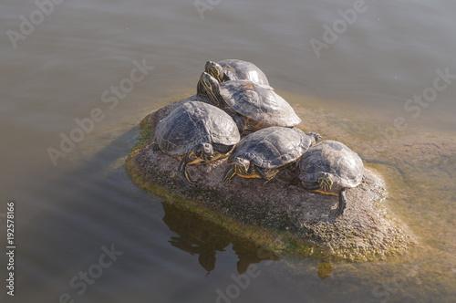 Fotobehang Schildpad Schildkröten 2