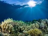 Underwater photography - 192587964