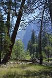 Yosemite National Park. CA