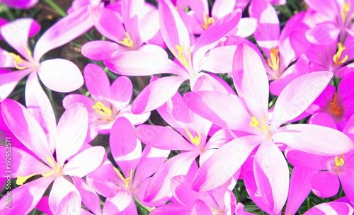 Leinwanddruck Bild Wiese mit zarten Blumen im Frühling