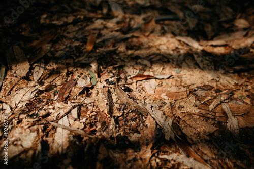 Fotobehang Koffiebonen Autumn