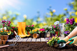Gardening - Gardener Planting Pansy With With Flowerpots And Tools  - 192663165