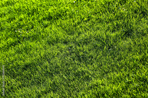 Green grass background texture with diminishing focus. Grass field for various summer sports concept