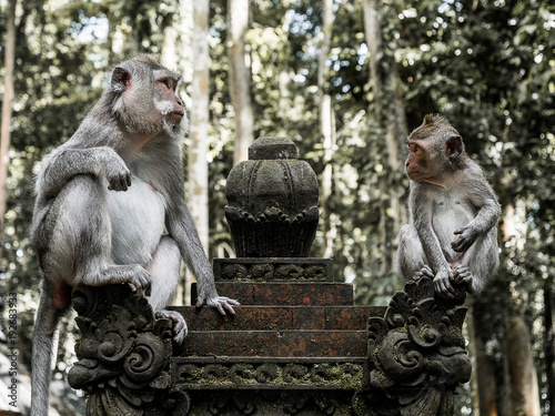 Foto Murales Old and young monkey looking at each other