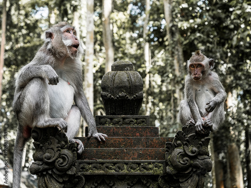 Old and young monkey sitting together