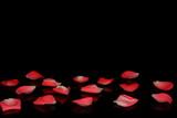 красивые розовые лепестки на черном фоне с отражением           - 192687705