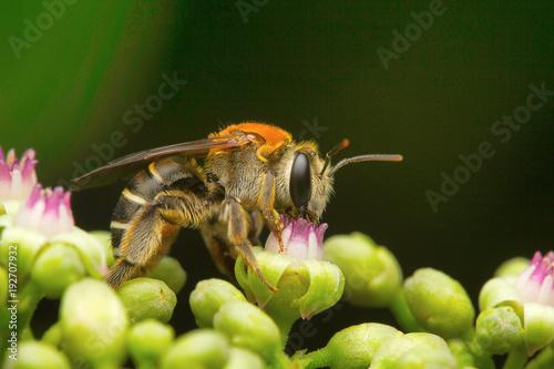 Fotobehang Bee Bees, Aarey Milk Colony