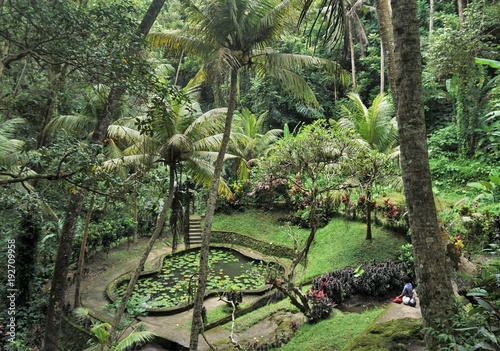 Papiers peints Bali Garden in Bali with pond and palm trees in the jungle
