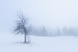 Lone tree in snow with broken branch at foggy morning