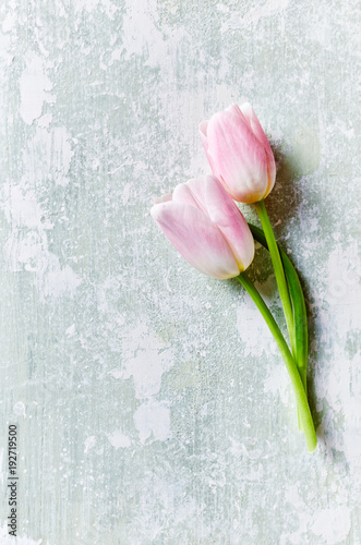 Pastel Pink Tulips on Rustic Background
