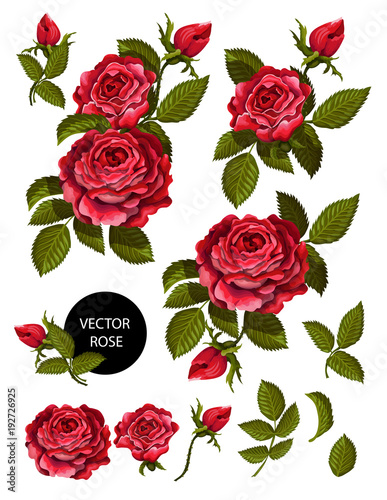 Fototapeta Set of red roses and elements for your design. Vector illustration.