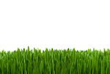 Grüner Rasen als Hintergrund Textur