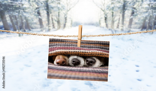 Staande foto Crazy dog cute photo of dogs on string in winter