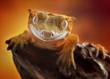 Crested gecko/Correlophus ciliatus macro closeup