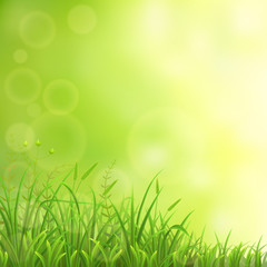 Spring natural background with green grass