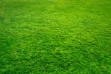 Grüner Rasen als Hintergrund
