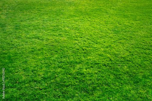 Fototapeta Grüner Rasen als Hintergrund